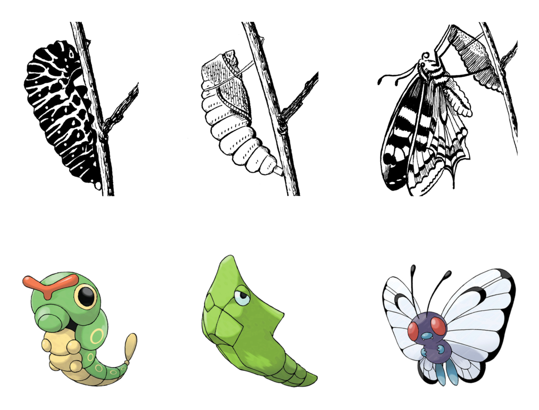 Pokémon evolution life cycle biology Caterpie butterfly
